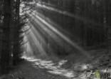 lesní stíny